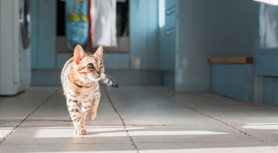 How to Remove Cat Urine from Hardwood Floors ehow