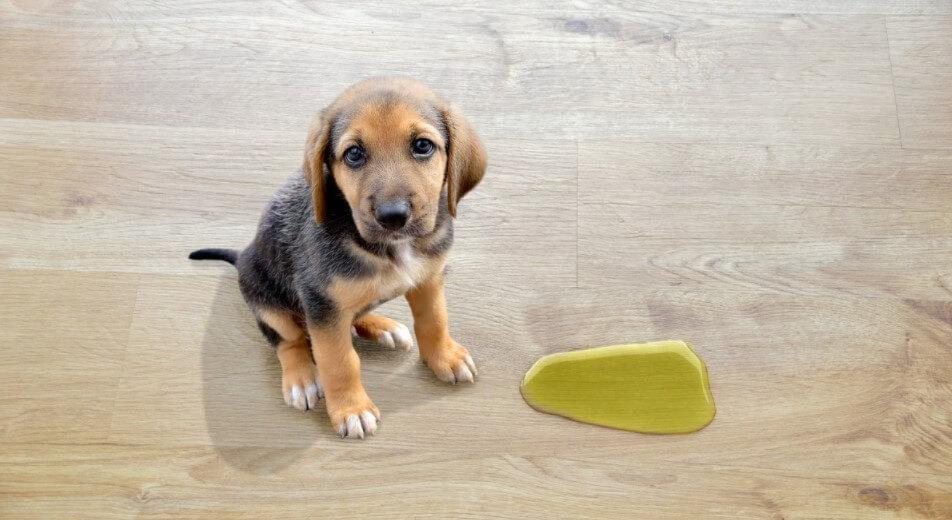Best Cleaner for Dog Urine on Hardwood Floors